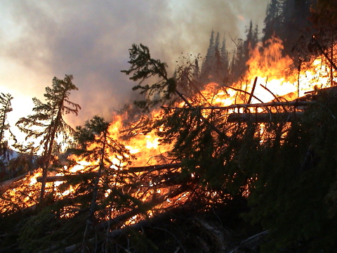 Forest Fire Expanding Faster