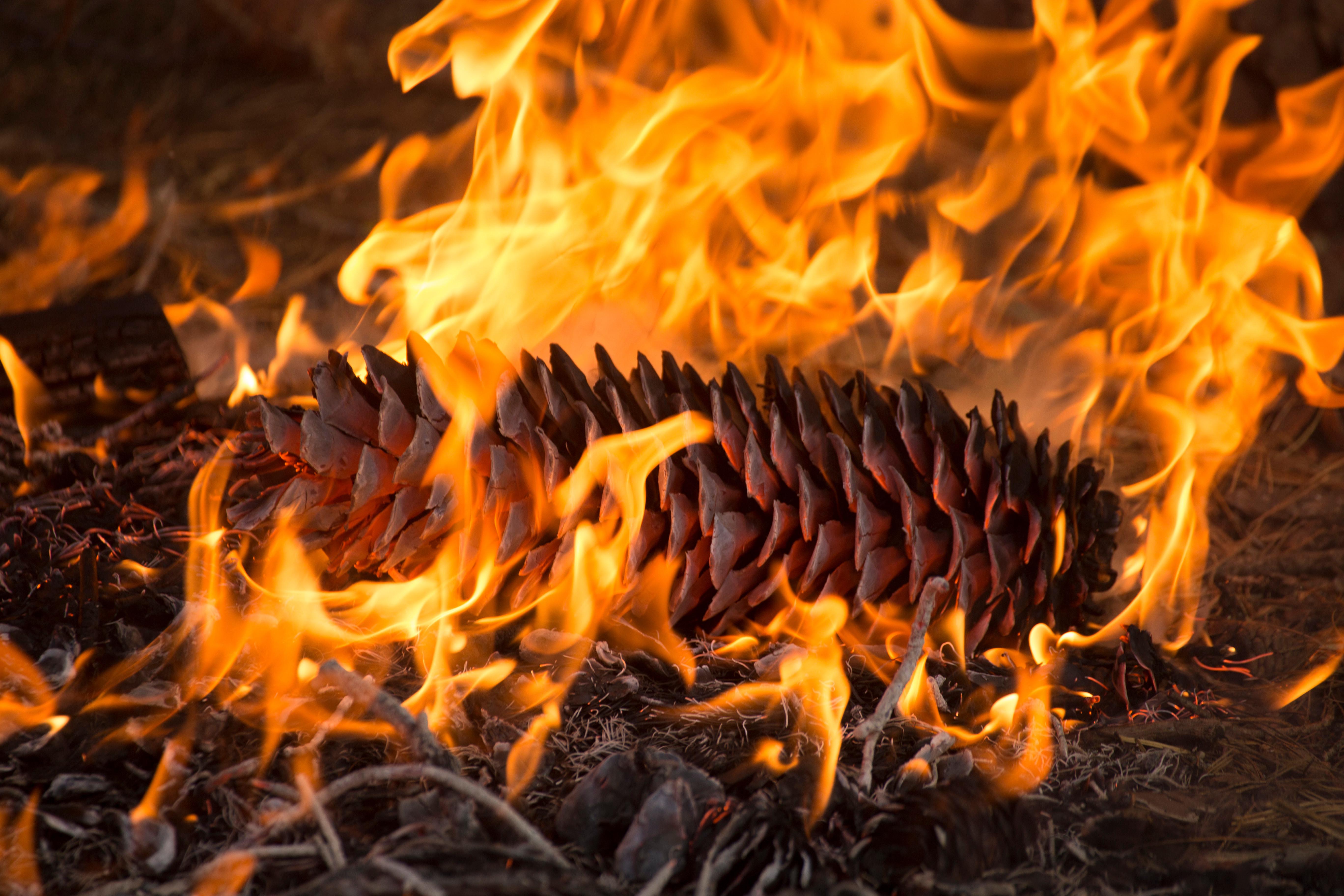 Pine cone burning